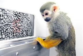 Daltonico mono, recuperar vision