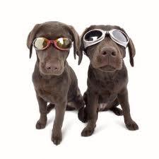 gafas para perros de sol