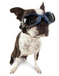 Gafas_Perros_Doggles, gafa sol perro