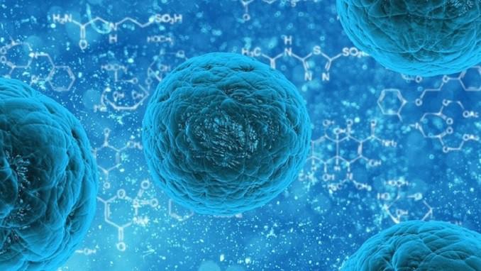 retina celulas madre